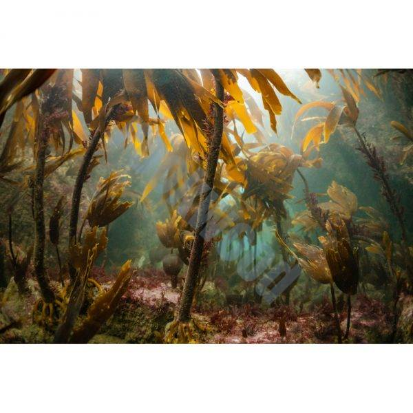 Autumn Underwater Postcard