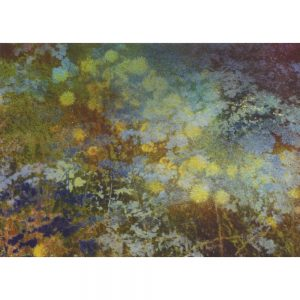 Hawkweed and Blue Greeting Card