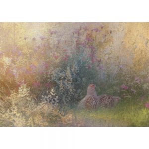 Grey Partridge and Knapweed Greeting Card